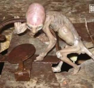 Mexican alien baby hoax